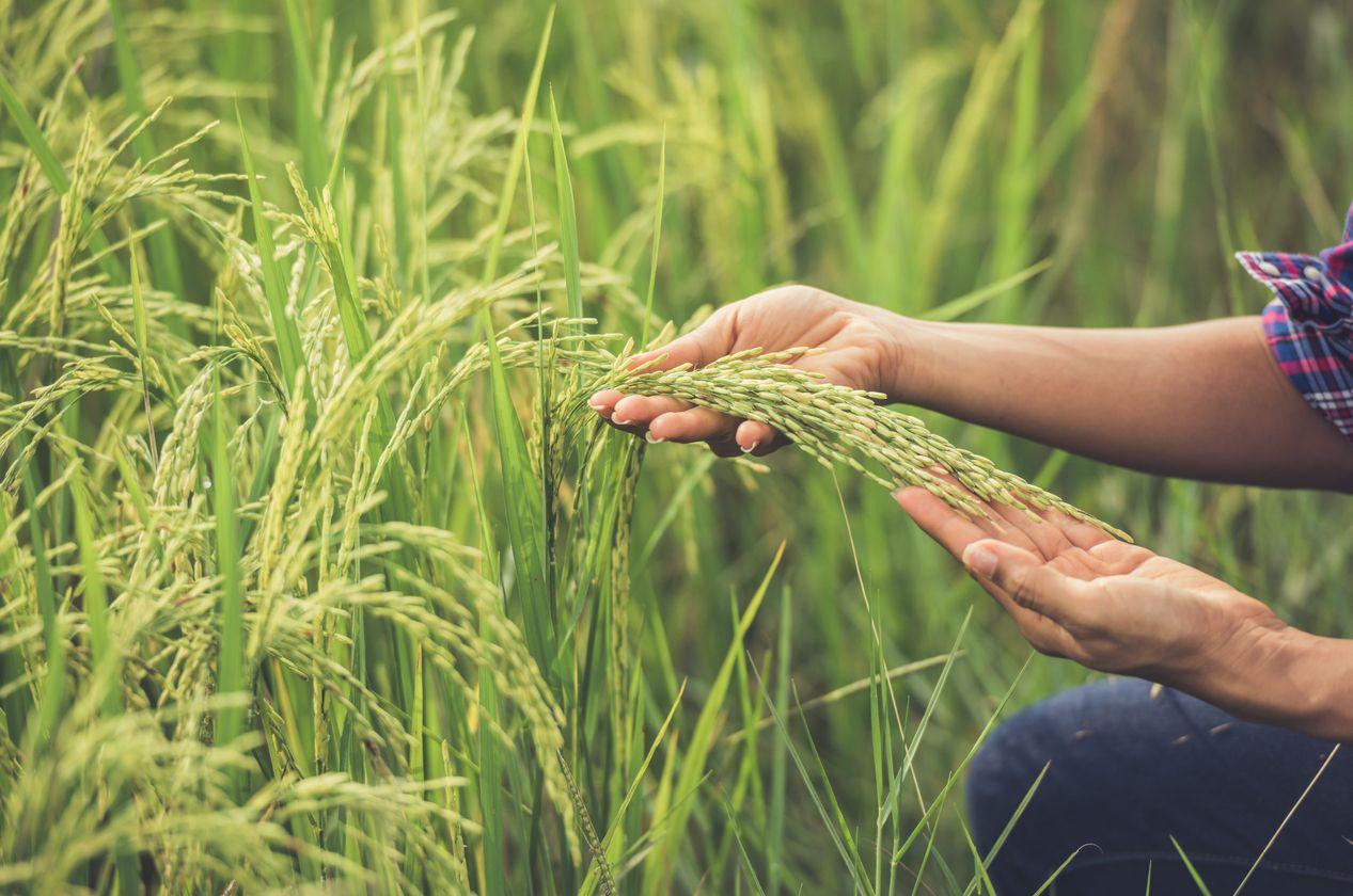 Cum vor putea beneficia producătorii agricoli de suport financiar?