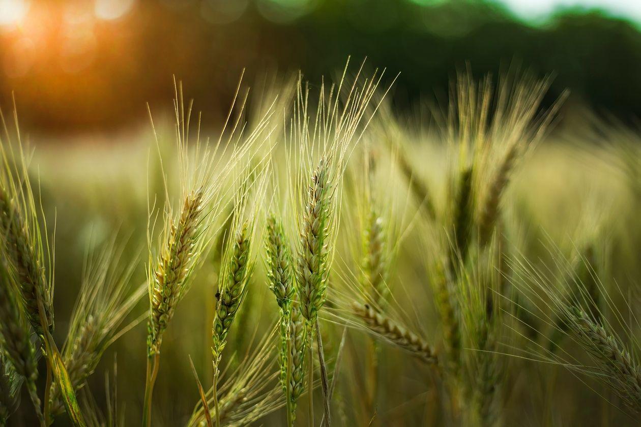 Cum vor fi susținuți producătorii agricoli care au suferit pierderi de peste 50%?
